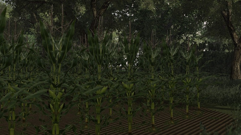 Real Corn Hd Texture V 1 0 Farming Simulator 2013 Ls Mod